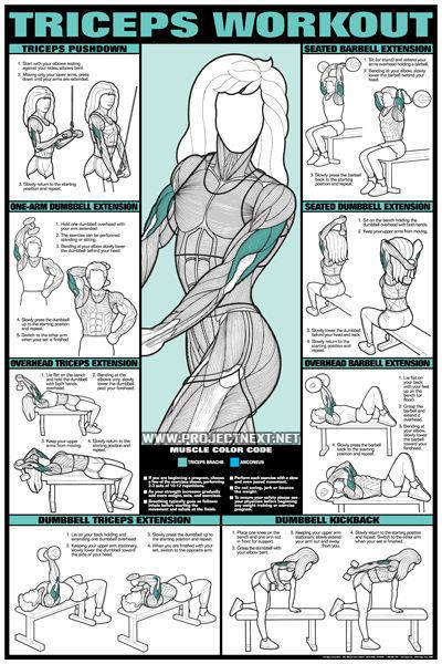 Arm Exercises For Women With Weights
