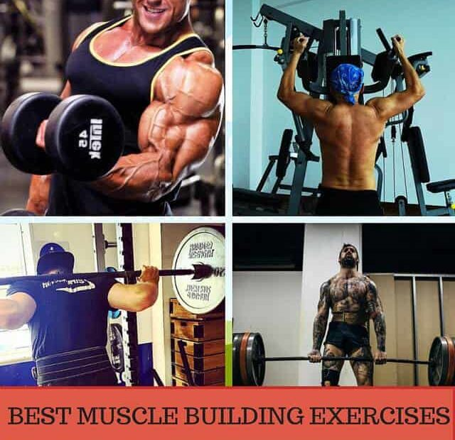 muscle-building-exercises