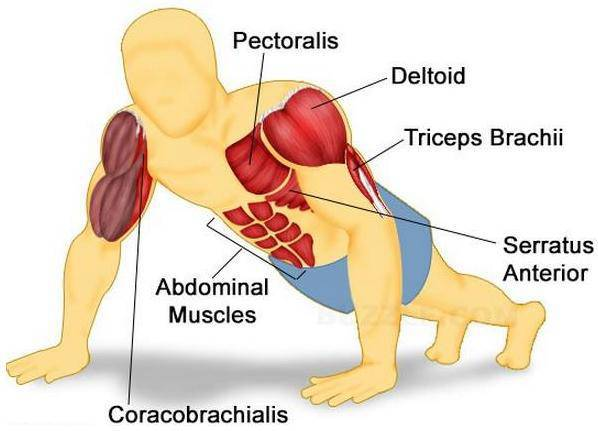 Muscles-worked