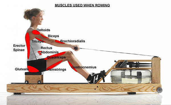 muscles-used-with-rowing-exercise