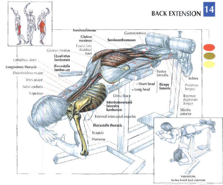 Why The Roman Chair Hyperextension Exercise Is So Important
