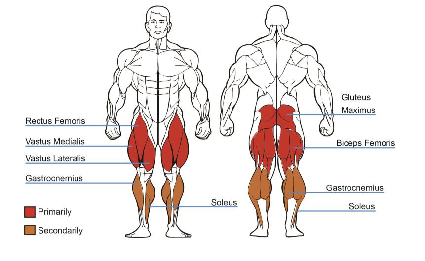 leg press machine muscles worked