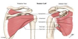 How Often Should I Train the Rotator Cuff?