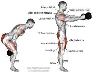 stability muscles